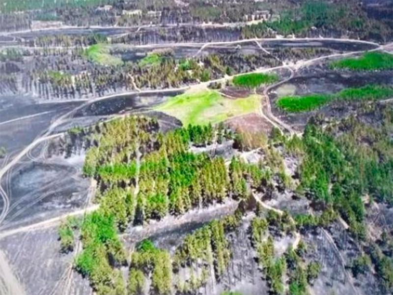 На Херсонщині ліси горять по-літньому