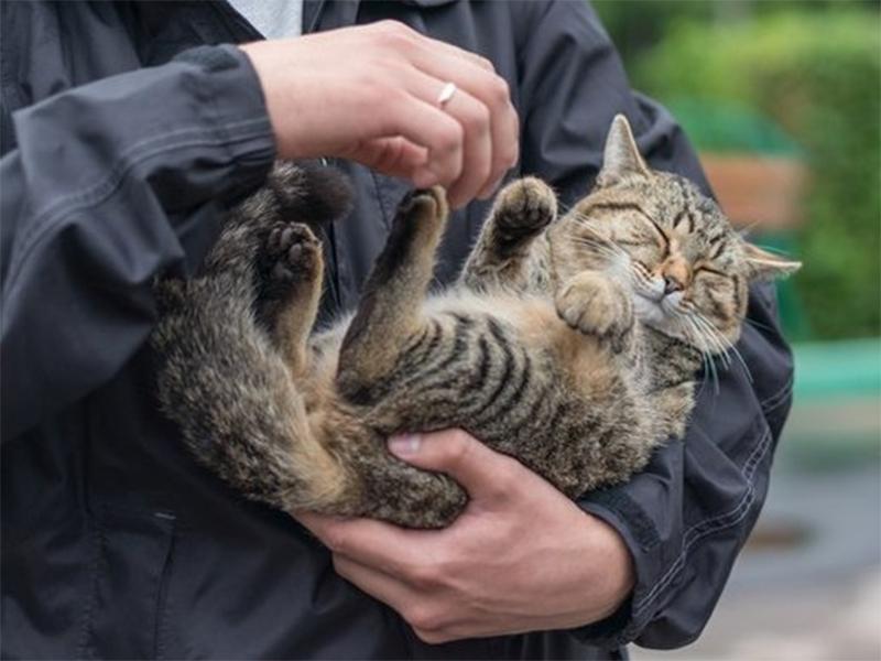 Депутати у Голій Пристані планують затвердити Програму регулювання чисельності безпритульних тварин