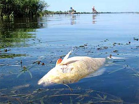 На Каховском водохранилище – массовая гибель рыбы