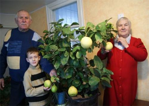 Каховчанин на Новый год вместо ёлки украсил лимонное дерево
