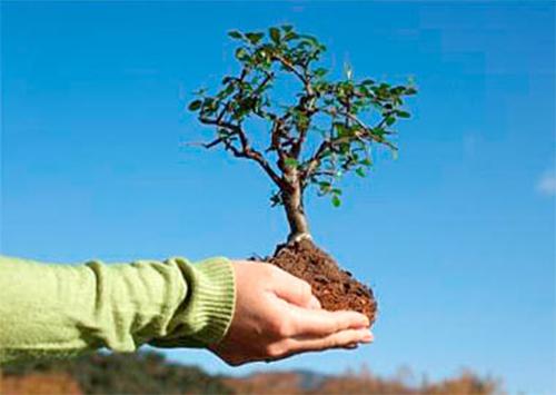 На Херсонщине начнут восстанавливать количество зеленых насаждений