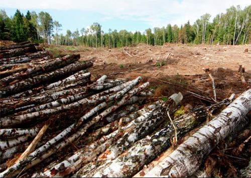 Счет браконьерским вырубкам в лесах Херсонщины пошел на гектары