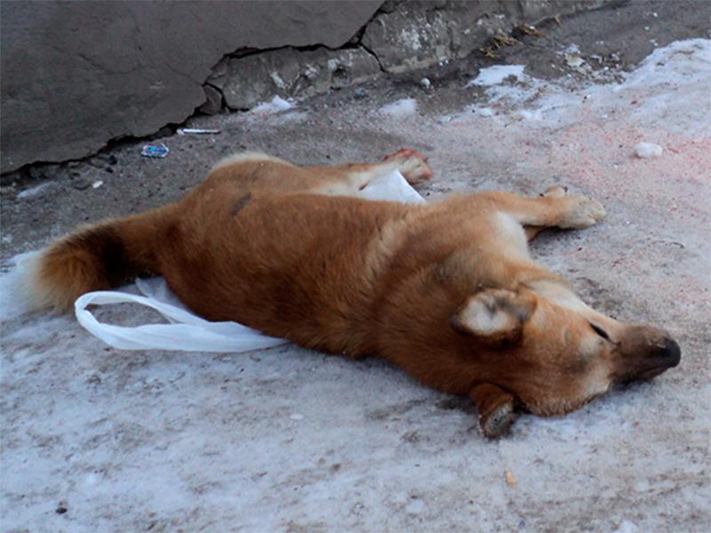В Херсонском порту убили всех собак