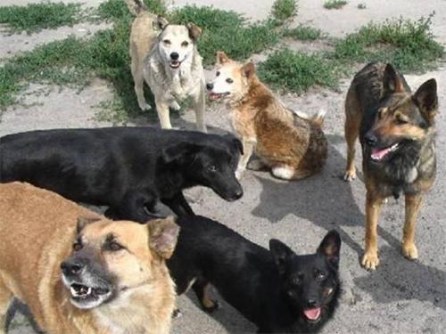 У Скадовську зростає кількість безпритульних тварин