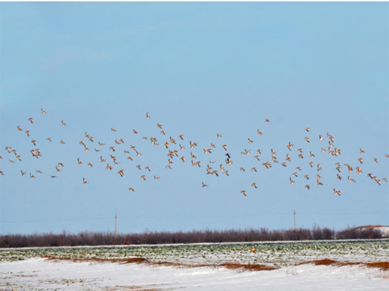 Браконьєри полювали на птахів на території заповідника: чи довго буде тривати така безкарність