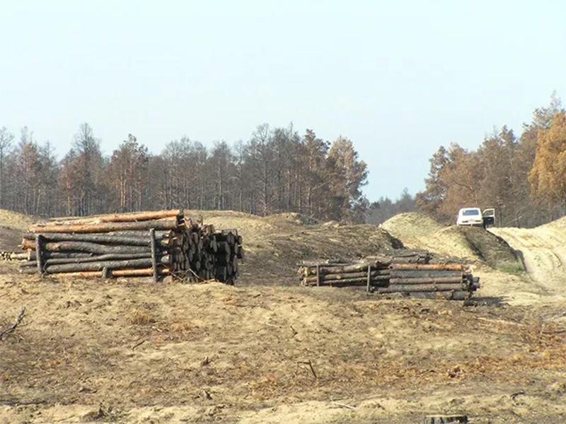 Ліс для Херсонщини — більше, ніж просто ліс