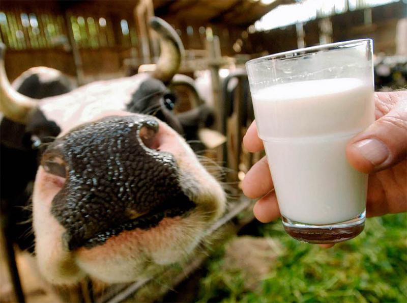 Достойную цену за молоко крестьяне Херсонщины не получают