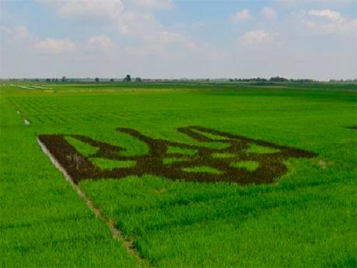 На Херсонщині крапля води на вагу... рису