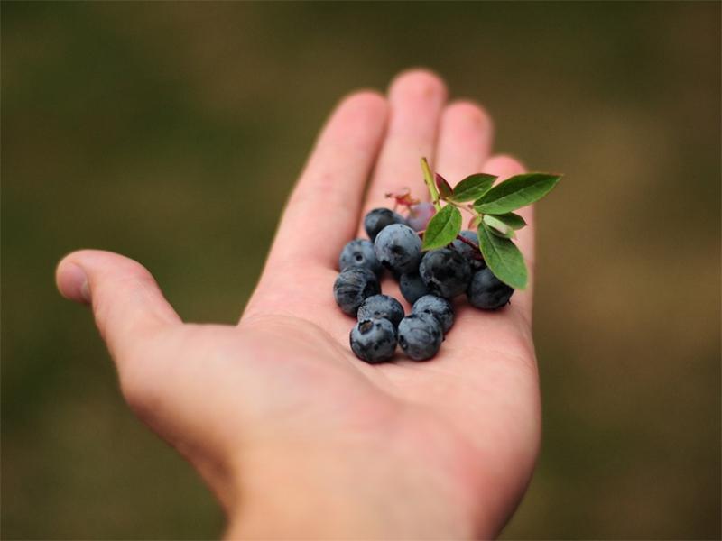 Полакомился ядовитыми ягодами херсонский бродяга