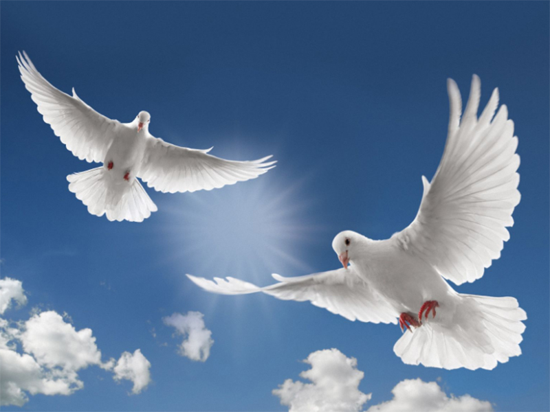 Крилатий символ миру вподобав степи Херсонщини