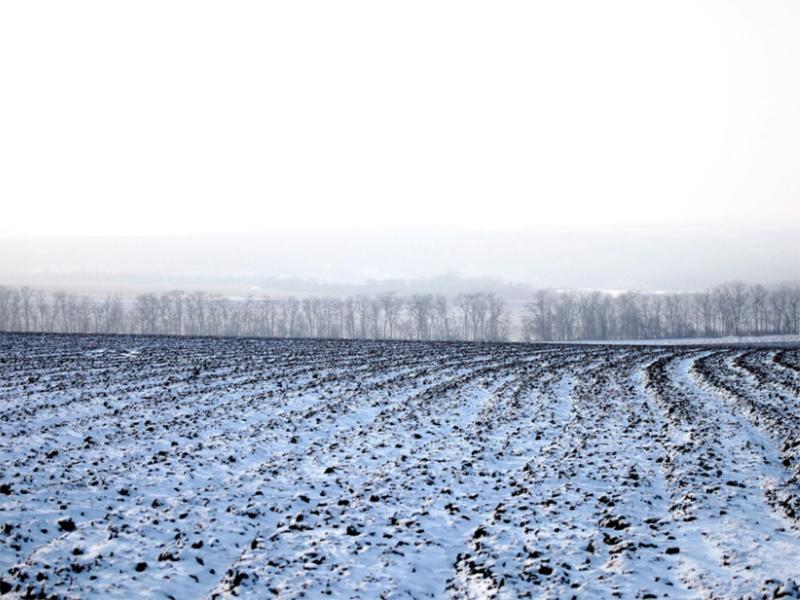 Снегопады подарят хлеб Херсонщине