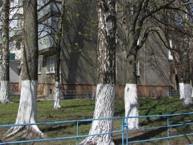 Деревья и бордюры в Херсоне белить больше не будут?