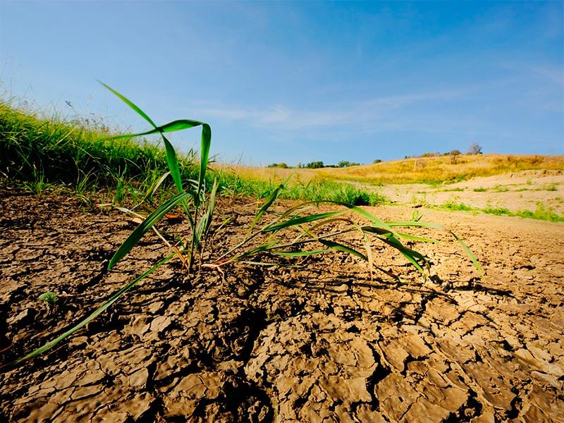 З голодної землі на Херсонщині врожаю не буде