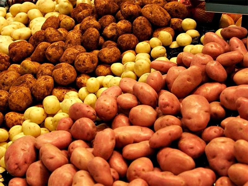 Херсонська картопля проситься на поля