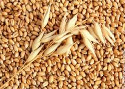 Через шахраїв у продовольчому резерві Херсонщини поменшало зерна