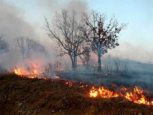 На Херсонщині підпали рукотворних лісів стали справжнім лихом