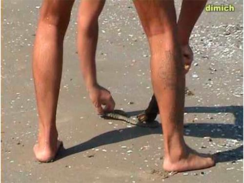 Борьба со змеем на пляже в Геническе