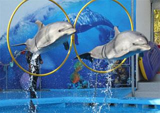 Скадовские дельфины живы и здоровы!