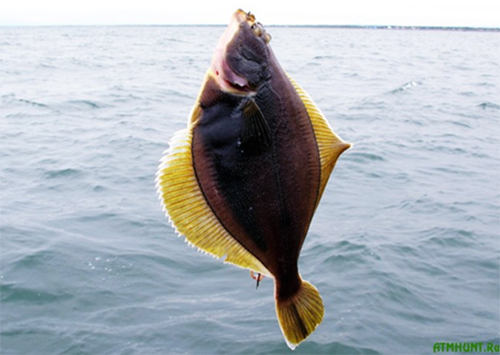 как ловят рыбу на должанской