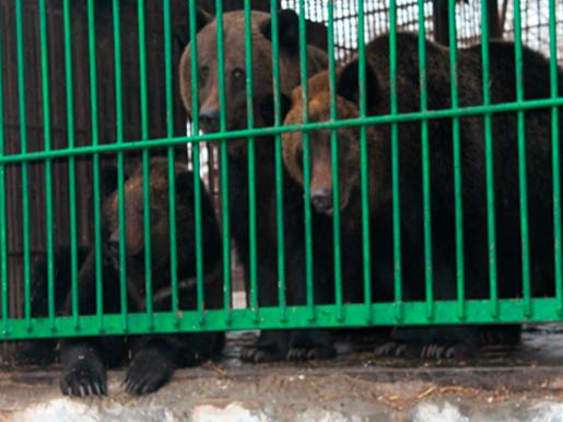 В Херсонском зооуголке животные с паспортами