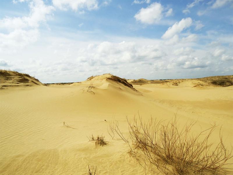 Экскурсии на выживание будут водить по Олешковской пустыне