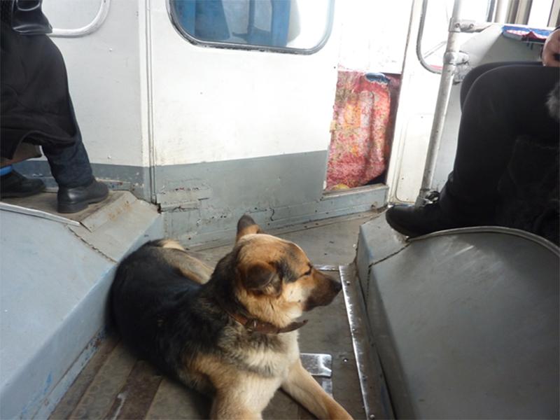 В херсонских троллейбусах пассажиров даже подкармливают