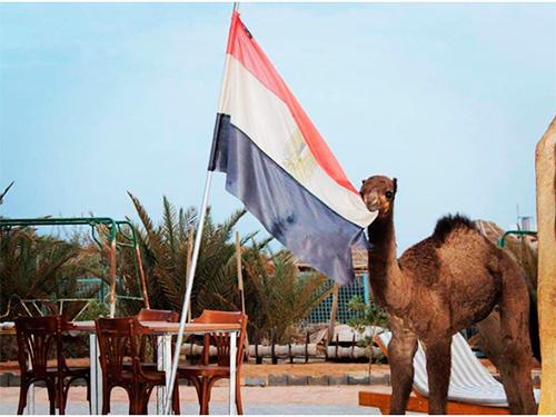 Искусство жить в Египте. Часть восьмая