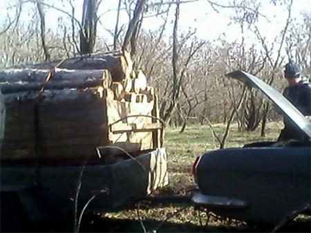 В Олешковском лесу «похозяйничали» браконьеры