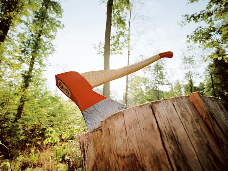 У Національному парку «Джарилгацький» повирубували дерева