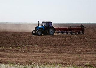 Ранними зерновыми культурами засеяно более 34 тыс. га полевых угодий области