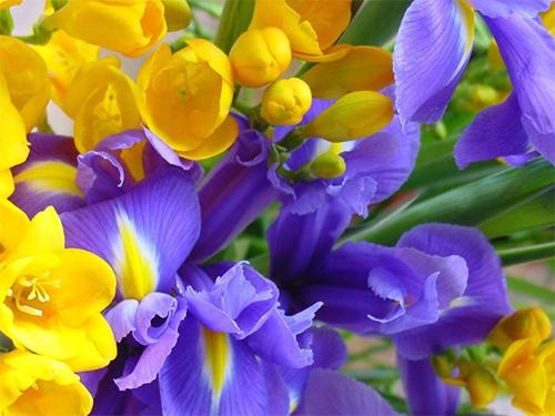 Херсонцы поздравляют с праздником весны, любви и красоты