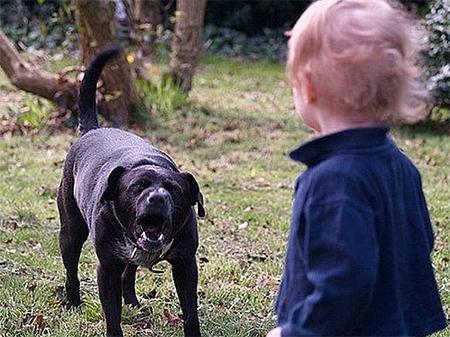 Собака пыталась откусить голову малышу в Херсоне