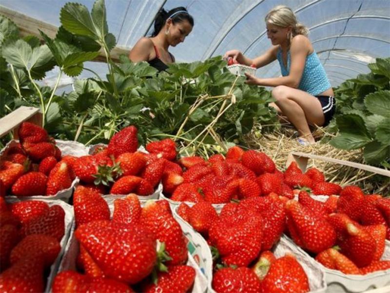 На Херсонщині ведеться робота до успішного старту сезонної зайнятості