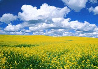 Як раціонально використовувати землю Херсонщини