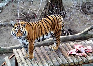 Херсонцы помогают Николаевскому зоопарку