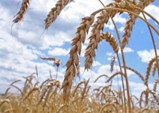 """Херсонские аграрии """"по-разному"""" будут применять льготу по НДС"""
