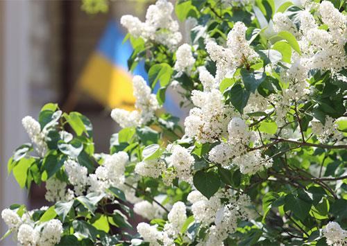 С праздником Первомая в Единой Украине!