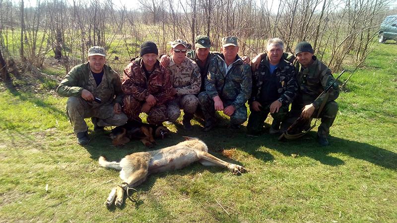 На Голопристанщині ціла зграя вовків з'їла чотирилапого охоронника домашнього подвір'я