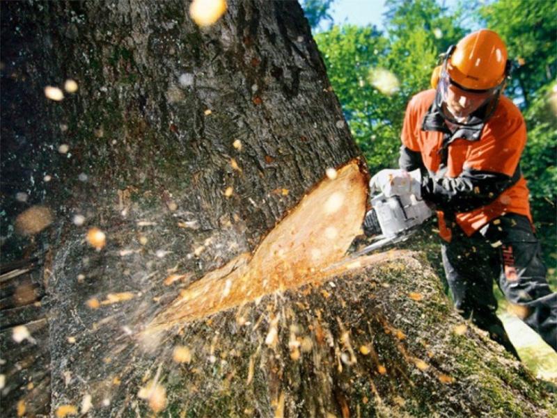На Херсонщине лесополосы на дрова вырубили. Теперь взялись за фруктовые сады