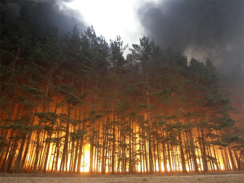 Вслед за плавнями на Херсонщине загорелись и леса