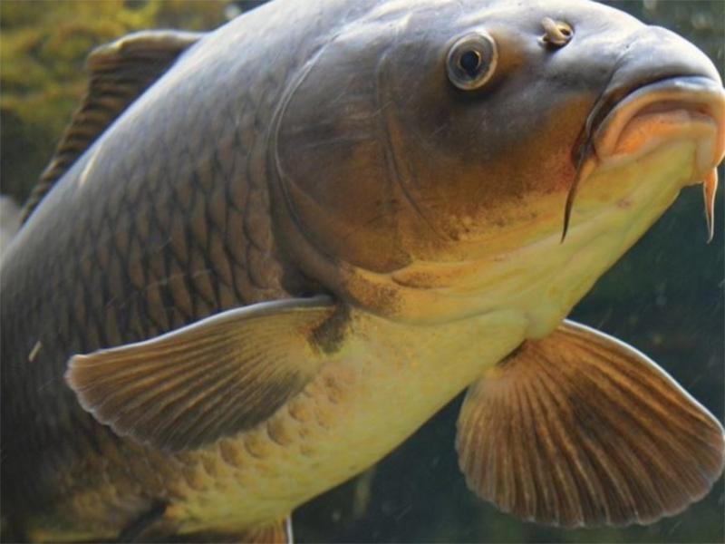 """Свежа ли новая """"рыбная голова"""" на Херсонщине?"""