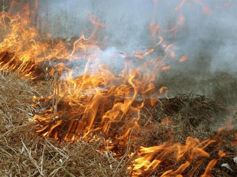 Женщина в Херсоне едва не сгорела в куче мусора