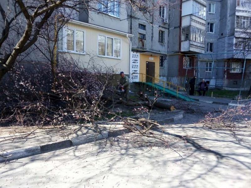 В Херсоне спилили цветущее дерево