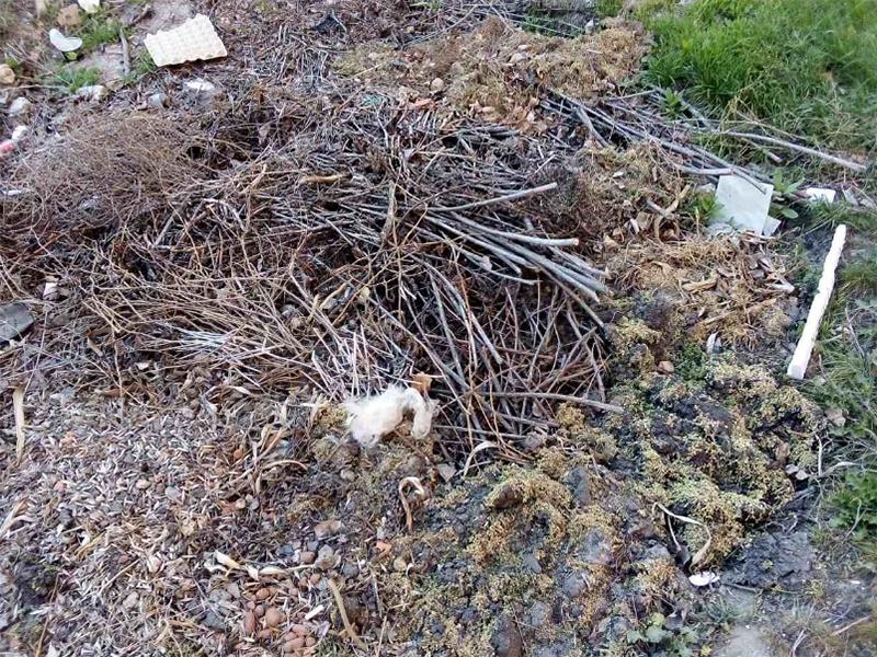 Последствия весенних субботников в Херсоне