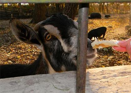 """""""Международная организация Лоренса Энтони"""" хочет вложить в херсонский зооуголок около 50 тыс. дол."""