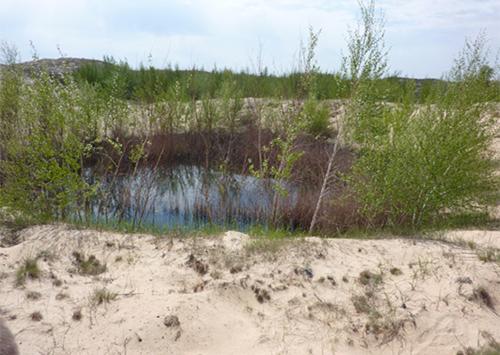 Диво природи: в пустелі утворилися озера