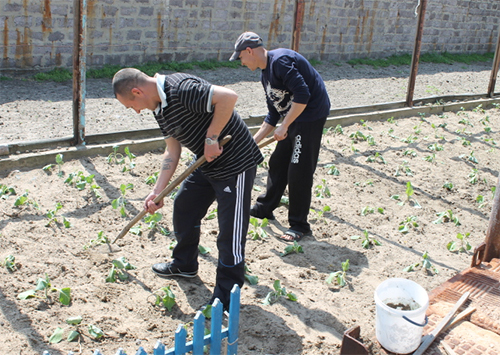 В Голопристанской ИК сажают… овощи