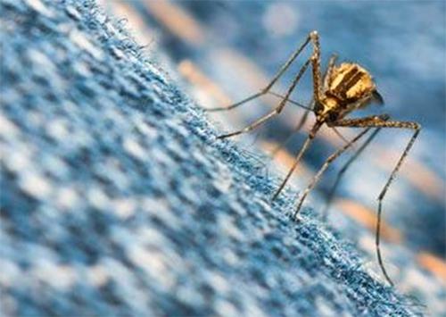 Кем будут кормить комаров на Арабатской стрелке?