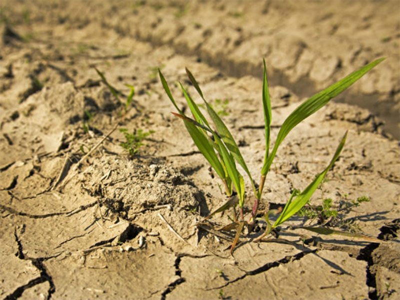 Капризы погоды сводят с ума аграриев Херсонщины