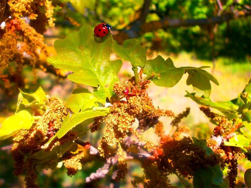 Чудеса ботанического сада в Херсоне